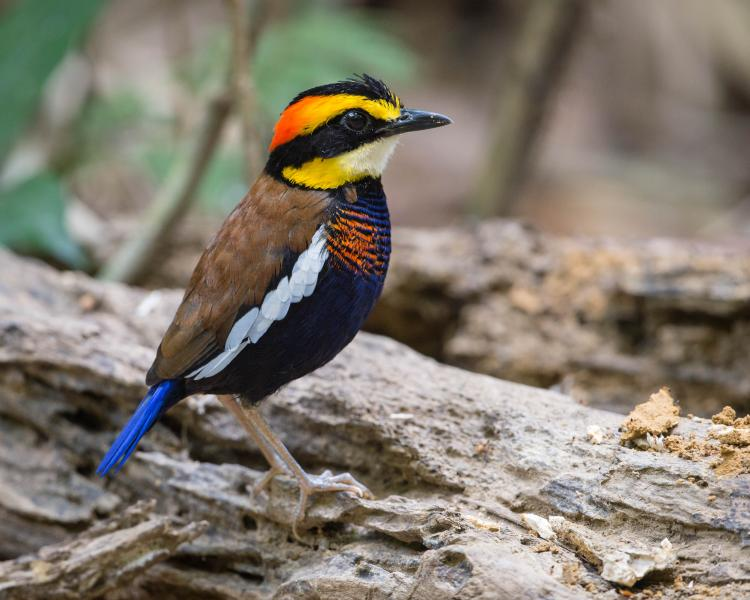 Getting to Know Birding Tours in Southern Thailand